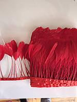 Перьевая тесьма из перьев антенок.Цвет красный.Цена за 0,5м