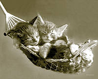 """Постер мини  """"Keith Kimberlin - kittens in a hammo"""""""