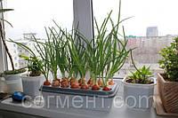 Устройство для выращивания зеленого лука, Луковое счастье, домашняя гидропонная грядка