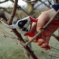 Обрезка дерево