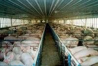 Сельский хозяйство