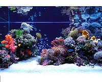 Морские аквариумы, фото 1