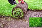 Работа с рулонным газоном (интересные статьи )