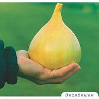 Эксибишен семена лука