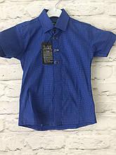 Рубашка короткий рукав електрик 2-7 лет