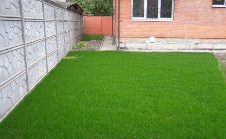 Газонная трава Лилипут семена сорта травы декоративная смесь медленно растущих низкорослых трав