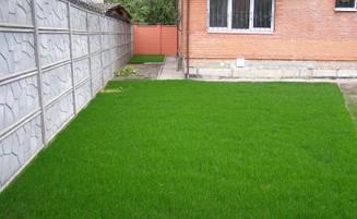 Газонна трава Ліліпут насіння сорти трави декоративна суміш повільно зростаючих низькорослих трав