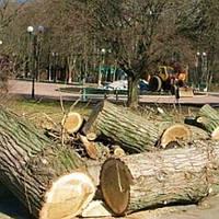 Спилить старое дерево в Харькове