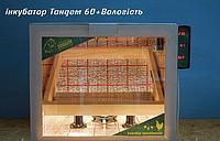 Инкубатор Тандем 60+Влажность