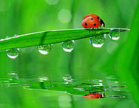 Что такой Био-органический гидрофобизатор или био-гидрофобная пропитка?