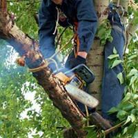 Обрезка деревьев Харьков