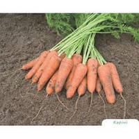 Карини семена моркови