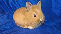 Кролик декоративный (Цветные)