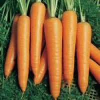 Вита Лонга семена моркови