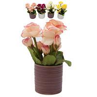 Цветы розы в горшке цилиндр 17 см