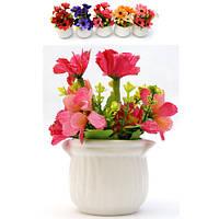 Цветы ромашки в горшке клумба 16 см