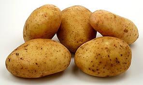 Картофель семенной Гранада, среднепоздний 1 репродукция