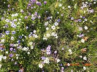 Газонная трава Декоративная цветочная смесь 50 гр