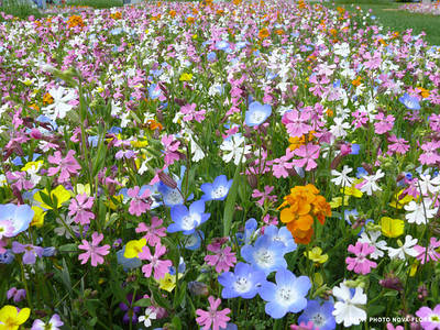 Квіткові суміші
