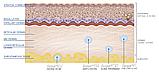 Интердермальный филлер Aliaxin GP (глобальная коррекция мелких морщин), Италия, 25mg/ml, 2x1ml, фото 3
