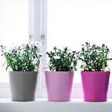 Декоративные растения, клетки и кашпо
