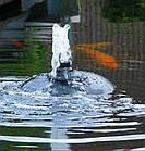 Погружной  фильтр для пруда Velda Internal Venturi 3000, фото 7