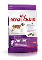 Royal canin ( Роял канін) корм для цуценят гігантських порід від 8до24 місяців. Giant Junior 15 кг