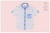 Рубашка для мальчиков 92 см РБ71 (92) Бэмби Украина