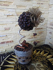 Топиарий кофейный, фото 3