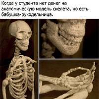 Ремонт модели скелета человека