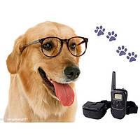 Ошейник для тренировки собак DOG TRAINING