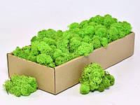 Стабилизированный мох зеленое яблоко 100 грамм.