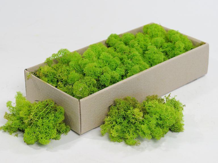 Стабилизированный мох ягель для фитостен lime green за 100 грамм.