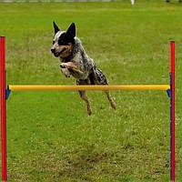 PA 6864  JUMP Комплект для тренування собак