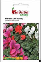 """Семена цветов Цикламен персидский """"Маленький принц"""", 3 шт, """"Хем Заден"""", Нидерланды."""