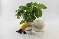 """Ароматизированные соевые свечи - лосьон ТМ """"SO PURE"""" Cucumber Mint"""