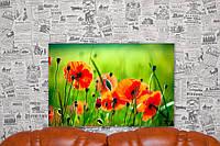 """Картина на холсте """"Полевые цветы. Маки. Природа"""". 60х40 см."""