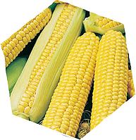 Семена сахарной кукурузы Сириус F1 5000 семян Agri Saaten