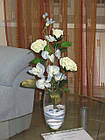 Ростовые, интерьерные цветы, фото 7