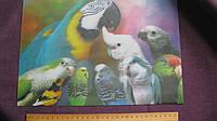 Подложка на стол, картинка 3D, пластик,35 х 24 см. попугайчики