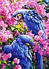 """Картина для рисования камнями Diamond painting Алмазная вышивка """"Синие попугаи Рио"""" полная выкладка"""