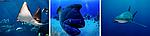 Бразерс - Дедалус - Эльфинстоун,  850 € / чел. Яхта Okeanos Xplorer  15 - 22 Июля 2017