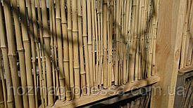 Бамбуковый забор,1,0м * 6,0м УЦЕНКА