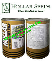 Семена арбуза АУ Продюсер, HOLLAR Premium (США), банка 500 грамм