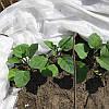 Агроволокно AgroVinn (Польша) 30 (1.6x100м)
