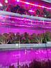 Фитолента для подсветки растений 15W 50см. 12V 36LED SMD5630 (с блоком питания), фото 6