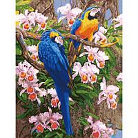 Картины по номерам 40 х 50 см. Попугаи