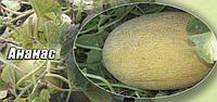 Семена дыня Ананас Agri Saaten 500 грамм