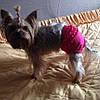 """Трусы  для собак """"Рюшка"""". Одежда для собак, фото 7"""