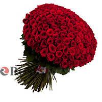 Гран При 151 красная роза